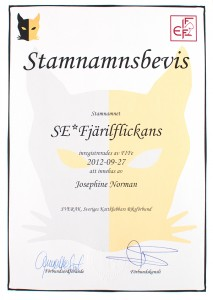 stamnamnsbevis2
